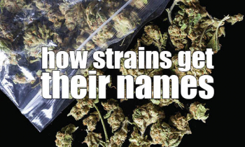 where strain names come from