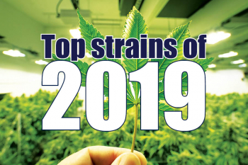 Top 3 strains of 2019