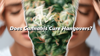 Does Cannabis Cure Hangovers?