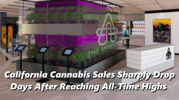 California Cannabis Sales Sharply Drop Days After Reaching All-Time Highs