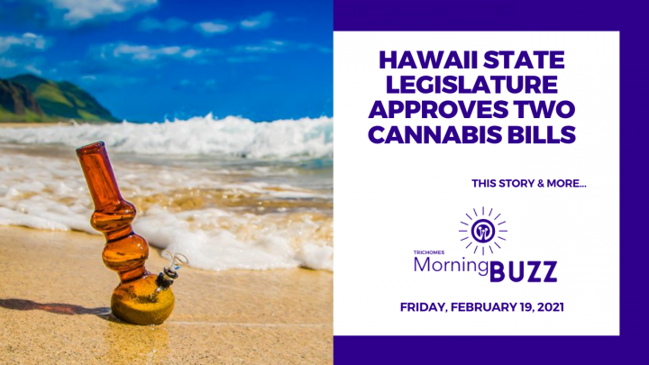 Hawaii State Legislature Approves Two Cannabis Bills | TRICHOMES Morning Buzz