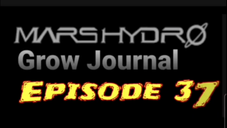 MarsHydro Grow Journal  #SP-250 #FC6500 RDWC Flower & Veg & Seedlings  #MARSHYDROSP6500  Episode 37