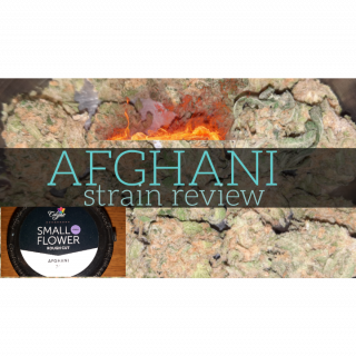 AFGHANI SMALL BUD BY CALYPSO.....FIRE! PA bud strain review