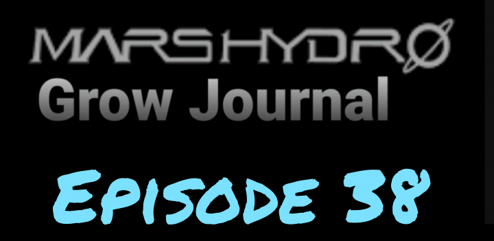 MarsHydro Grow Journal  #SP-250 #FC6500 RDWC Flower & Veg & Seedlings  #MARSHYDROSP6500  Episode 38