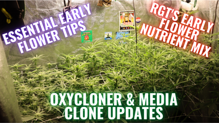 ESSENTIAL EARLY FLOWER TIPS, A GARDEN UPDATE, AND WHAT TO EXPECT: GROWING CANNABIS INDOORS MADE EASY