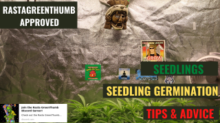 GROWING CANNABIS INDOORS MADE EASY: HOW TO CARE FOR SEEDLINGS & SEEDLING GERMINATION