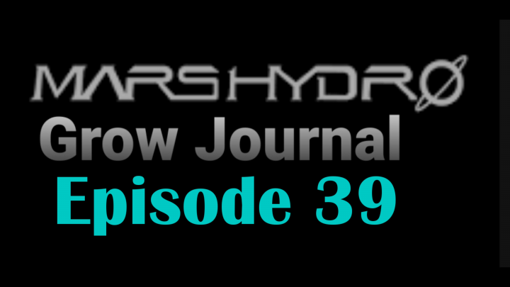 MarsHydro Grow Journal  #SP-250 #FC6500 RDWC Flower & Veg & Seedlings  #MARSHYDROSP6500  Episode 39