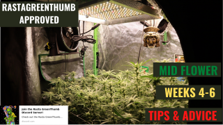 GROWING CANNABIS INDOORS MADE EASY: MID FLOWER TIPS AND ADVICE + GROW UPDATE + SOME SHIT DIED!!!