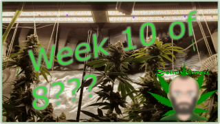 Week 10 of 8??? | Running Late | Mars Hydro Grow Journal SP and TS Series