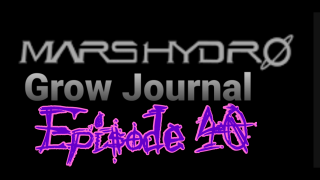 MarsHydro Grow Journal  #SP-250 #FC6500 RDWC Flower & Veg & Seedlings  #MARSHYDROSP6500  Episode 40