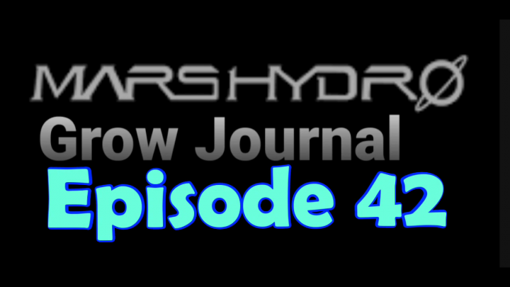 MarsHydro Grow Journal  #SP-250 #FC6500 RDWC IN THE FLOWER TENT. #MARSHYDROSP6500  Episode 42