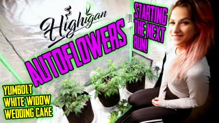 Growing Autoflowers Week 1-6, Starting, Training, Topping! Ep1
