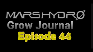 MarsHydro Grow Journal  #SP-250 #FC6500 RDWC IN THE FLOWER TENT. #MARSHYDROSP6500  Episode 44