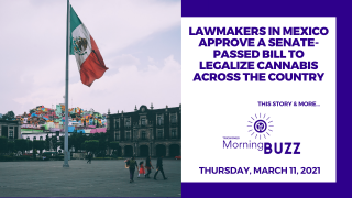 Lawmakers in Mexico Approve a Senate-Passed Bill to Legalize Cannabis | TRICHOMES Morning Buzz