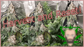 Another Harvest?!? | Mars Hydro Grow Journal TS and SP