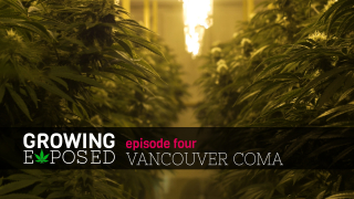 Clean, Mean, Growing Machine Growing Coma Kush In Vancouver - Season 1 Episode 4