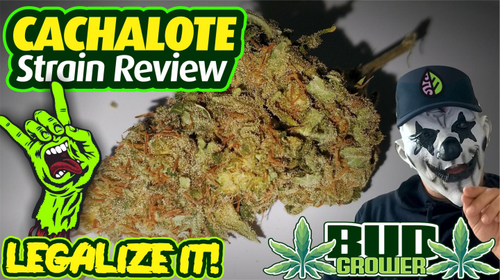 Strain Review