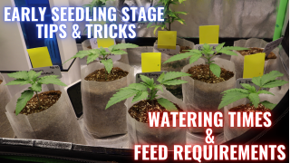 THE EARLY SEEDLING STAGE & GARDEN UPDATE: GROWING CANNABIS INDOORS MADE EASY