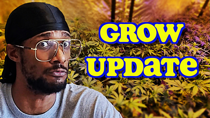 Grow Update : Time To Top Dress