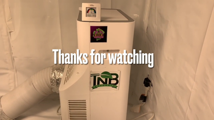 In the Peg City Cannabis Grow Rooms   Day 20 of Flower #tnbnaturals #tnb