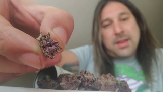 Dan's 420 Chronicles - Trop Santo Weed / Flower Review [Live] in Pueblo 3/19/21