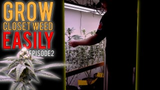 GROWING WEED EASILY IN MY CLOSET (PHOTOPERIODS) START TO FINISH ORGANIC GROW GUIDE | EPISODE2
