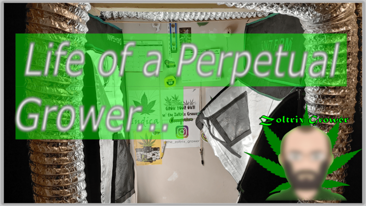 Life of the Perpetual Grower