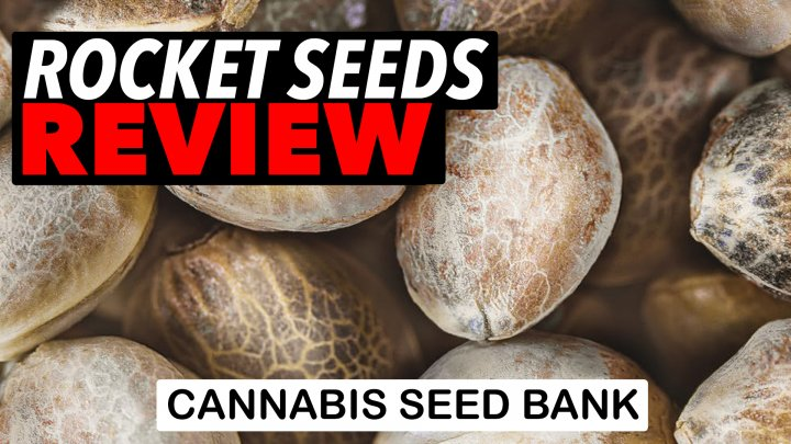 Rocket Seeds Review - Cannabis Seed Bank Review 2021