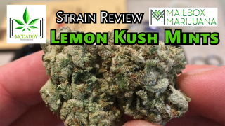 Lemon Kush Mints (Private Reserve Collection) from Mailbox Marijuana - Strain Review