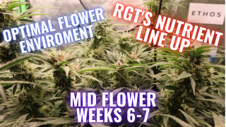 MID-LATE FLOWER WEEKS 6-7  WHAT YOU NEED TO KNOW: GROWING CANNABIS INDOORS MADE EASY