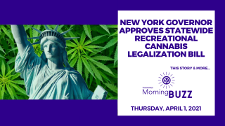 New York Governor Approves Recreational Cannabis Legalization | TRICHOMES Morning Buzz