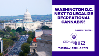 Washington D.C. Next to Legalize Recreational Cannabis? | TRICHOMES Morning Buzz