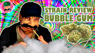 STRAIN REVIEW - BUBBLE GUM