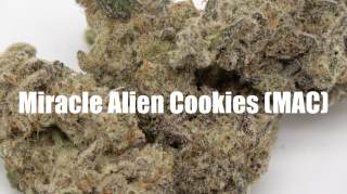 Miracle Alien Cookies Strain Review 2021