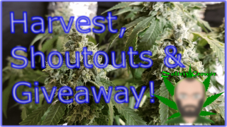 A Harvest, Shout Outs and a Big ILGM Give Away!