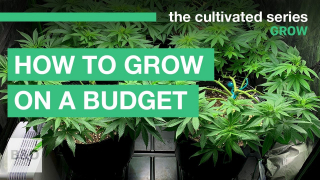 How to Grow on Budget