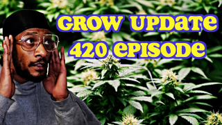 420 Episode Of Growing Kush
