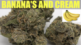 Banana's and Cream Strain Review 2021