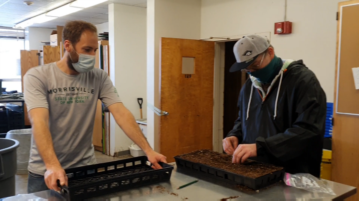Celebrating Earth Day by Sowing Cannabis Seeds in Lab