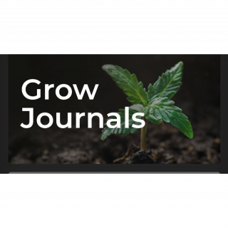 Grow Journal With Kush Santa