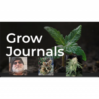MARCH 29/21  Grow journal With Kush Santa
