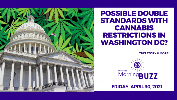 Possible Double Standards with Cannabis Restrictions In Washington DC?   TRICHOMES Morning Buzz
