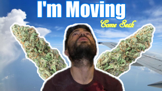 I'm Moving: Lemon Kush Strain Review/Mainly Seshin'