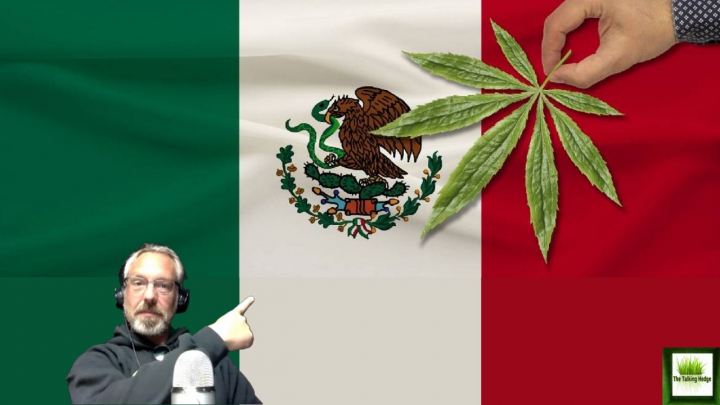 Mexico's Cannabis Legalization Update