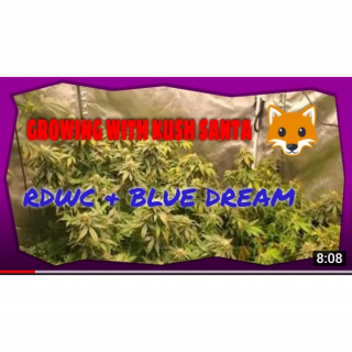 Marijuana Grow Room Tour SP 6500 FC 6500 RDWC hydroponics System