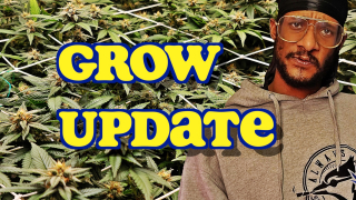 Cannabis Grow Update With SilkySlim416