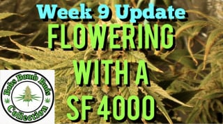 Week 9, Flowering With A Spider Farmer SF 4000 Update