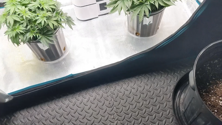 transplanting from 2gal to 5gal pots