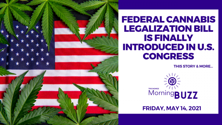 Federal Cannabis Legalization Bill is Finally Introduced in U.S. Congress | TRICHOMES Morning Buzz