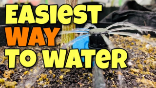 How To Build A Watering System For 4x8 Grow Tent - Easiest Way To Water!!